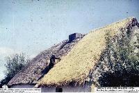 Jack Curran Thatching Tom Whelan's House, Baile na nGall ( Ballinagaul) Ring