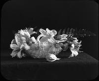 Still Life. Image Of Flowers