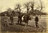 Unidentified Men With Bull, Ballinamona House, County Waterford