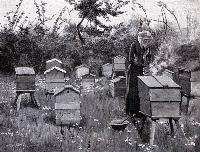 Bee Keeping Near Lismore